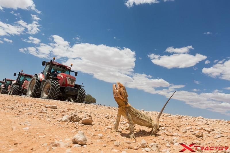 Xtractor iguana in natura