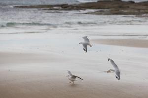 Gabbiani in volo in riva al mare