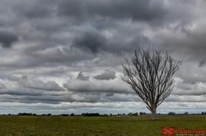 Paesaggio con albero nella natura