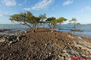 Paesaggio con alberi e mare