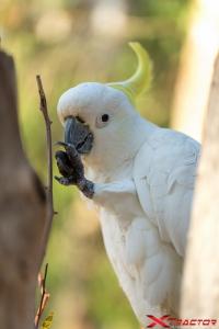 Pappagallo bianco su un albero