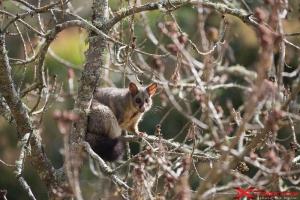 Animali sugli alberi tra la natura